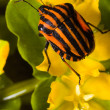 Bug on a wood flower — Stock Photo