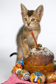 Kitten and an easter set — Stock Photo