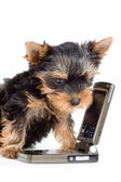 Puppy with a mobile phone — Stock Photo