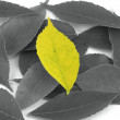 Stock Photo: Uniqueness - Yellow Leaf