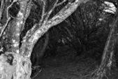 Woods 3 — Stock Photo