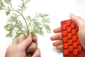 Hand holding package with red tablets and plant — Foto Stock