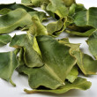 Organic kaffir lime leaves — Stock Photo #1539417