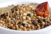 Indian spice mix in a white bowl — Stock Photo