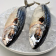 Two mackerel on a white plate - Stockfoto