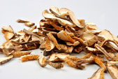 Dried wild shiitake mushroom — Stock Photo