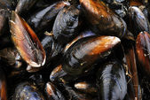 Fresh and closed organic mussel — Stock Photo