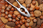Some organic nuts — Stock Photo
