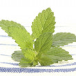 Lemon balm perfect as spice — Stock Photo