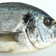 Sea bream from greece — Stock Photo