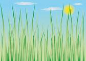 Pflanzliche hintergrund — Stockvektor