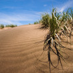 Sand dunes — Stock Photo #1540411