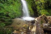 Acland Falls — Stock Photo