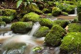 Water stream — Stock Photo