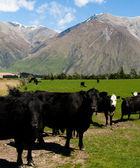 Dairy farm — Stock Photo