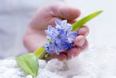 Tender hyacinth — Stock Photo