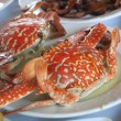 Red crabs — Stock Photo