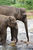 Elephants at watering place — Stock Photo