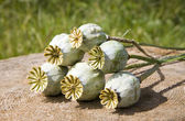 Poppy-seed — Stock Photo