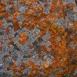 Stock Photo: Colourful Lichen growing on rocks