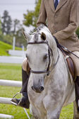 Show Pony — Stock Photo