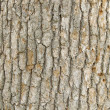 Tree Texture background — Stock Photo