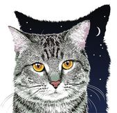 Vector gray cat — Stock Vector