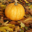 Halloween. Pumpkin — Stock Photo #1630937