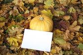 Halloween. pumpkin — Stock Photo