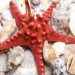 Red starfish — Stock Photo #2382814
