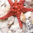 red starfish — Stock Photo