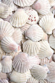 White scallops — Stockfoto