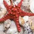 Red starfish — Stock Photo #2557830