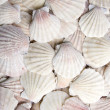 Royalty-Free Stock Photo: White scallops
