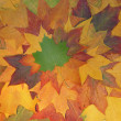 Autumn pattern - Stockfoto
