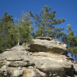 Stock Photo: Pines on rock in East Kazakhstan