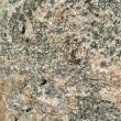 Lichen on the stone — Stock Photo