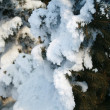 Snow-covered fir branch — Stock Photo