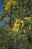 Fragment gałęzi drzewa — Zdjęcie stockowe