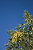 Fragment of tree branch on blue sky — Stock Photo