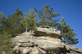Pines on the rock in East Kazakhstan — Stock Photo
