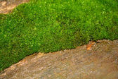 Mossy wood — Stock Photo