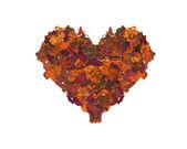 Lobes heart — Stock Photo