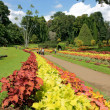 Peradeniya Botanical Gardens. Sri Lanka. — Stock Photo #1549749