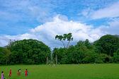 Peradeniya Botanical Gardens. Sri Lanka. — Stock Photo