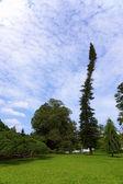 Королевский ботанический сад Перадения. канд — Стоковое фото