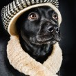 Cute mutt wearing a vintage hat - Stock Photo