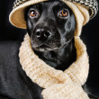 Stock Photo: Cute mutt wearing vintage hat