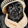 Cute mutt wearing a vintage hat — Stock Photo