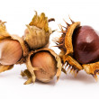 Chestnut and hazelnut — Stock Photo #1552544